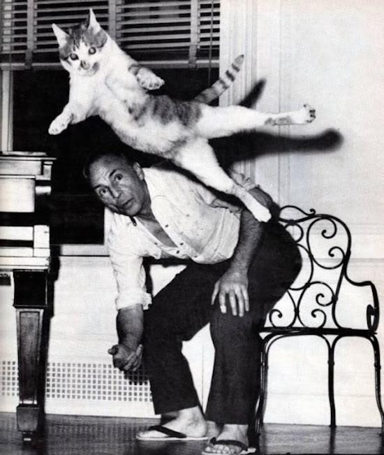 Баланчин со своей любимицей кошкой Муркой, которую он обучал балетным па