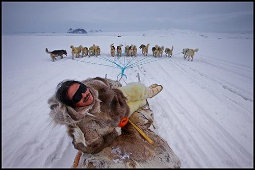 Оле Йорген Хаммекен и его собаки на морском льду. 2012