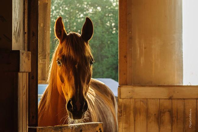 Солнце в гриве. Фото Ольги Гришко
